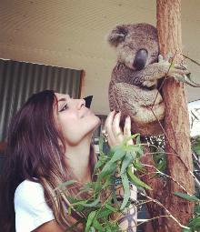Krwella Koala